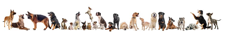 Die ganze Welt der Hunderassen